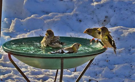 life in the beaver hills heated bird bath from wild birds