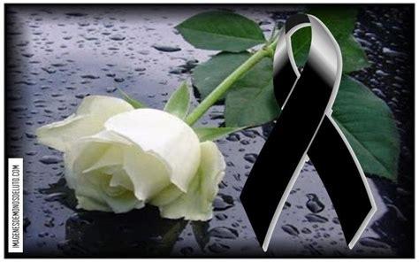 imagenes rosa luto de juarez mo 241 os de luto con una rosa blanca imagenes de mo 209 os de
