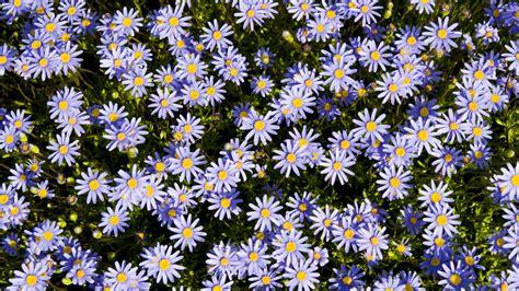 flower wallpaper 1366x768 1366x768 flower pc wallpaper wallpapersafari