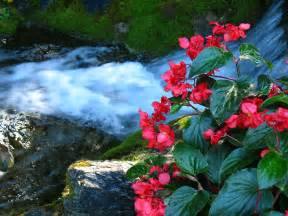 Beautiful Waterfalls With Flowers by Quot Waterfalls And Flowers Quot By 5hikers Redbubble