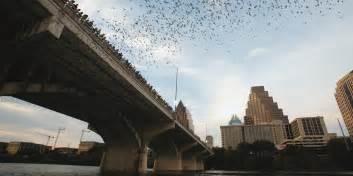 Bats In Tx South Congress Bridge Bat Guide