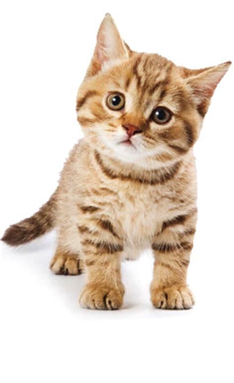 cute cat pictures   images  facebook tumblr