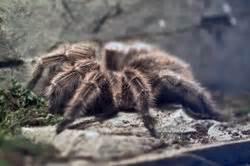 wie kommen spinnen ins haus wie kommen spinnen ins haus