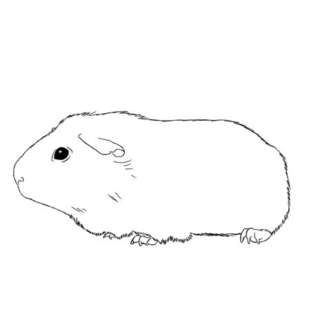 Guinea Pig Coloring Pages Coloringsuite Com Guinea Pig Coloring