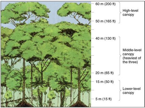rainforest diagram notes chap15