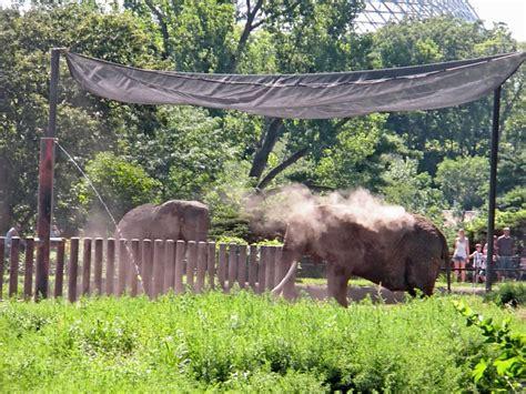 does lincoln park zoo elephants nebraska omaha s henry doorly zoo travel 50 states