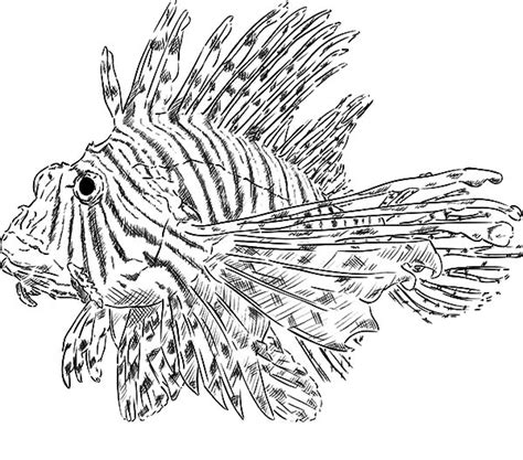 pterois volitans isolated lionfish coloring pages batch