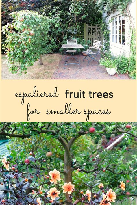 Small Home Fruit Garden Espaliered Fruit Trees The Solution For Small