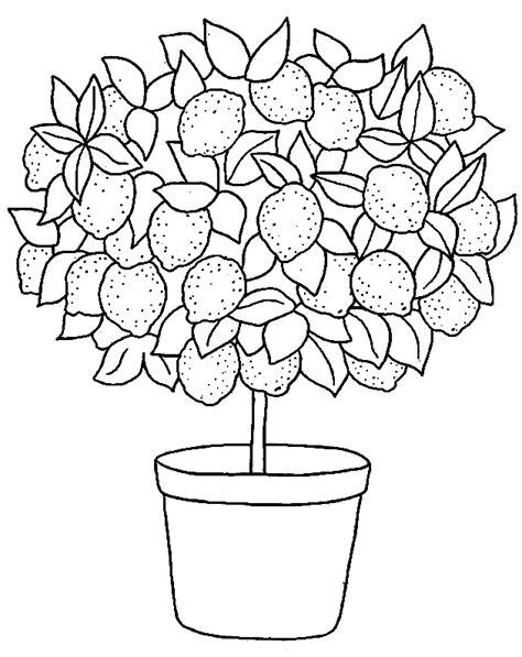 lemon tree coloring page dibujos de limoneros imagui