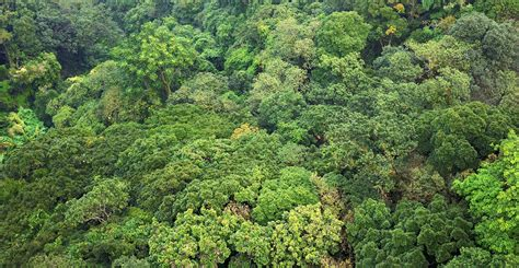 Canopy Amazon new paper raises question of tropical forest carbon