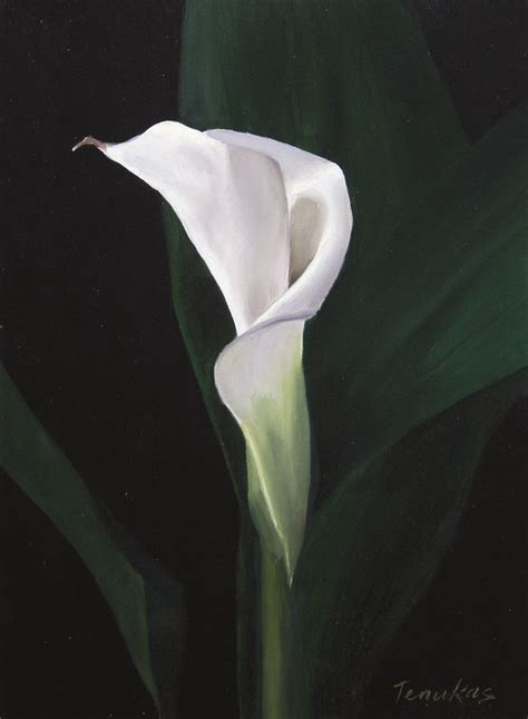 single calla lily painting by linda tenukas