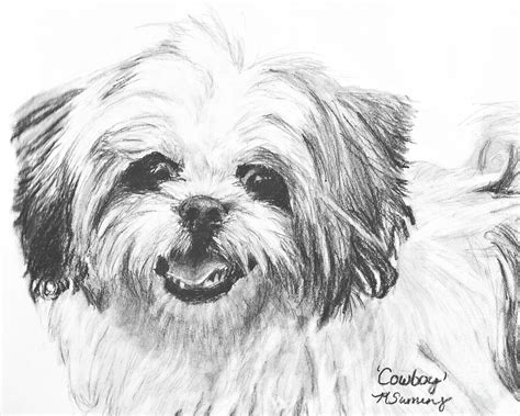 how to draw a shih tzu smiling shih tzu drawing by kate sumners