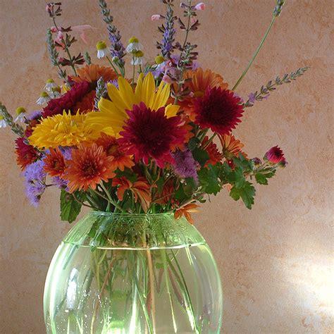fiori da interni fiori da esterno e da interno annuali e perenni per