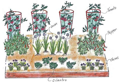 Salsa Garden Layout How To Plant A Garden With A Purpose Leafguard