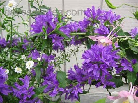 Plant Identification Closed Please Help Identify Purple Purple Garden Flowers Identification