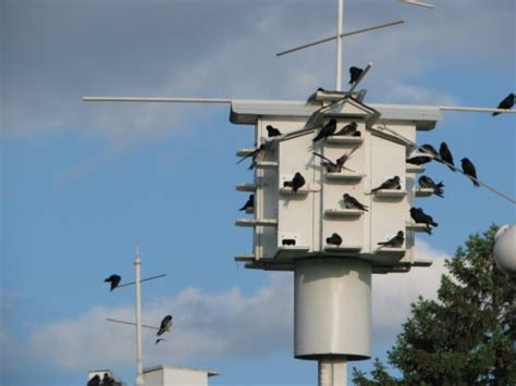 purple martin house home ideas