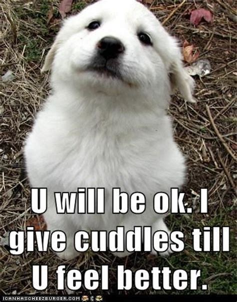 feel better puppy feel better search we it cuddle and puppy