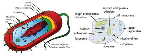 tuberculosis bacteria diagram diagram of tuberculosis bacteria images how to guide and