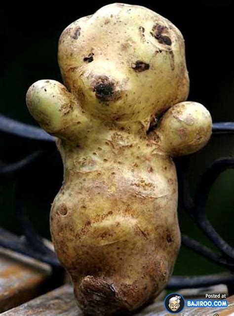 funnyfoodblogs funny potato food amazing pics