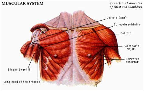 format asuhan keperawatan tbc asuhan keperawatan lengkap otot bagian dada