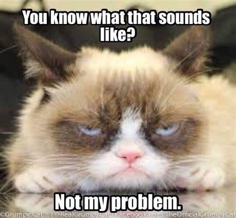 Cat Problems Meme - 1000 images about grumpy cat 4 president 2020 on