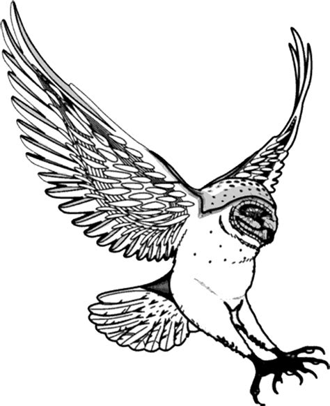 flying owl clipart barn owl flying clip black and white cliparts