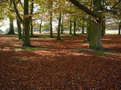 richmond park richmond park the history of oak trees