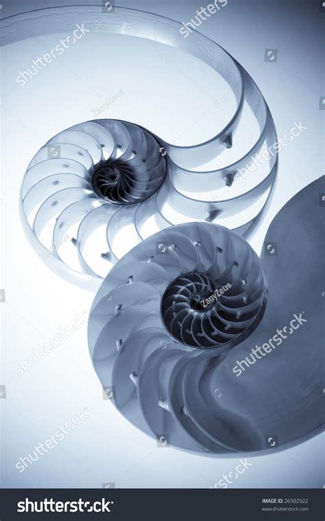 cross sectional cut cross sectional cut of nautilus shells showing internal