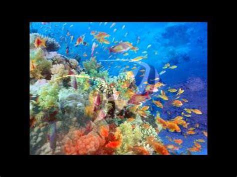 imagenes para fondo de pantalla del mar paisajes fondo del mar youtube