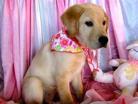 all about puppies ta fl image gallery puppies about