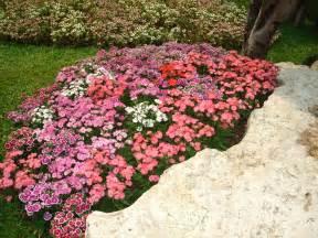 Flowers From The Garden File Flower Garden Found In Tak Thailand 2 Jpg