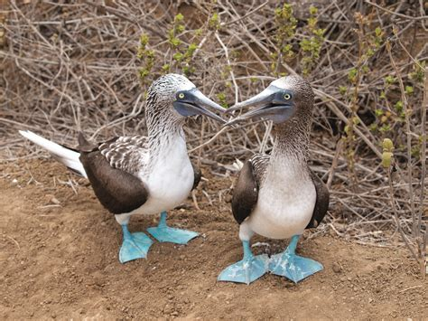 %name Color Book   BLUE FOOTED BOOBY BEE BOP   The Secret Language of Color