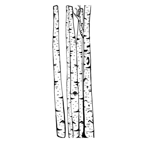 birch tree rubber st rubber st birch cling st tree st large trees forest