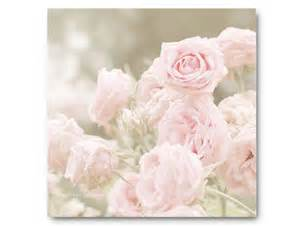 shabby chic pink roses pink photography shabby chic baby pink roses soft