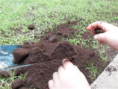 Coffee Grounds For Gardening by Using Coffee Grounds For Gardening Guide On Correct Uses