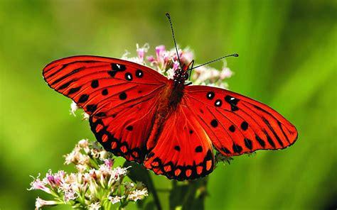 natural korean wallpaper with leaves loves butterfly 20 colourful butterflies hd wallpapers wonderwordz