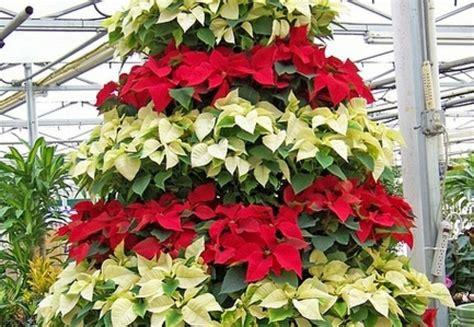 imagenes navideñas naturales decorando con plantas navide 209 as naturales q top life