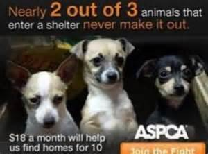 Animal shelter ads the massachusetts society for
