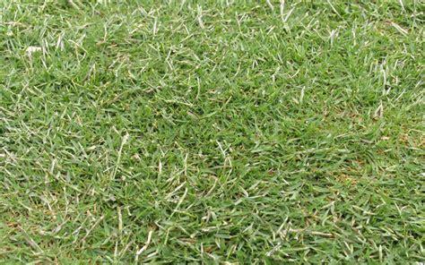 Santa Grass by Santa Paul Munns