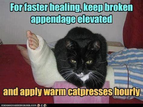 Broken Leg Meme - cat compress cat s purring can help to heal a broken bone
