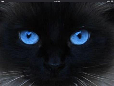 Blue Sapphire Cat Eye Efeq sapphire blue cat eye color blue