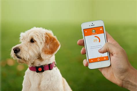 puppy apps investment from neovia and rsa pet telematics goes mainstream as industry leaders