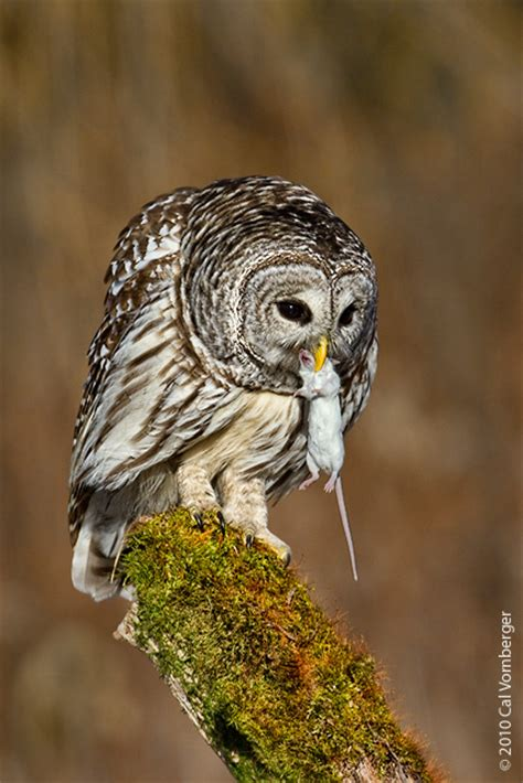 do owls eat game google family feud