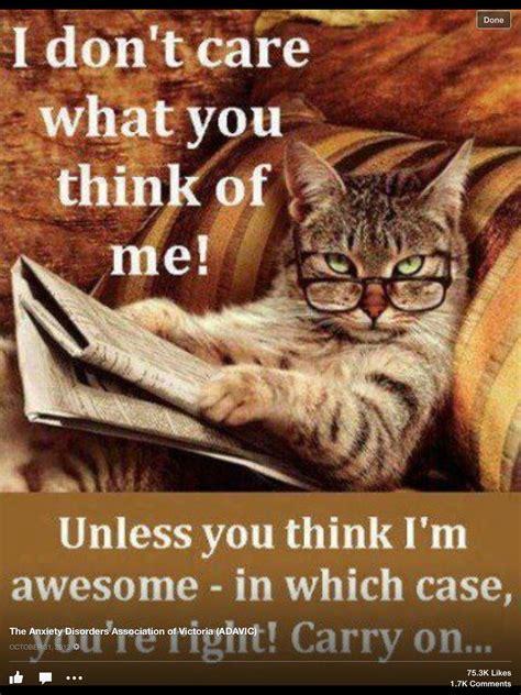 cat funnies kitteh lolz im   im
