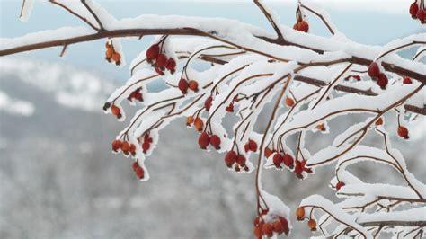 piante fioriscono in inverno 10 piante resistenti al freddo fioriscono in inverno