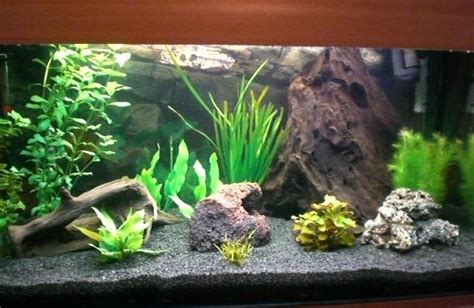 community mein aquarium aquayoude