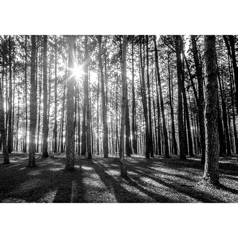black and white woodland wallpaper rainbow black white woodland forest mural photo giant wall