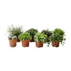 ikea plants himalayamix potted plant ikea