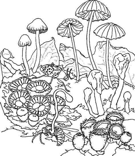 Niehs Coloring Book Rainforest Plants Coloring Pages