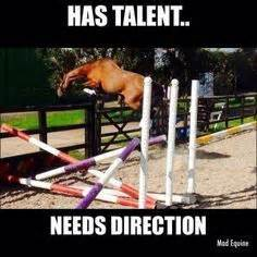 34 best images about funny horse captions on pinterest funny horses funny horse quotes and